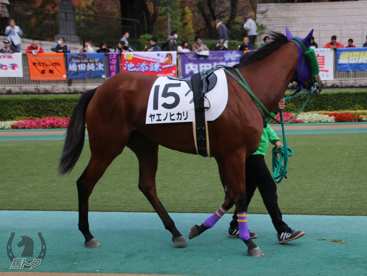 ヤエノヒカリの馬体写真