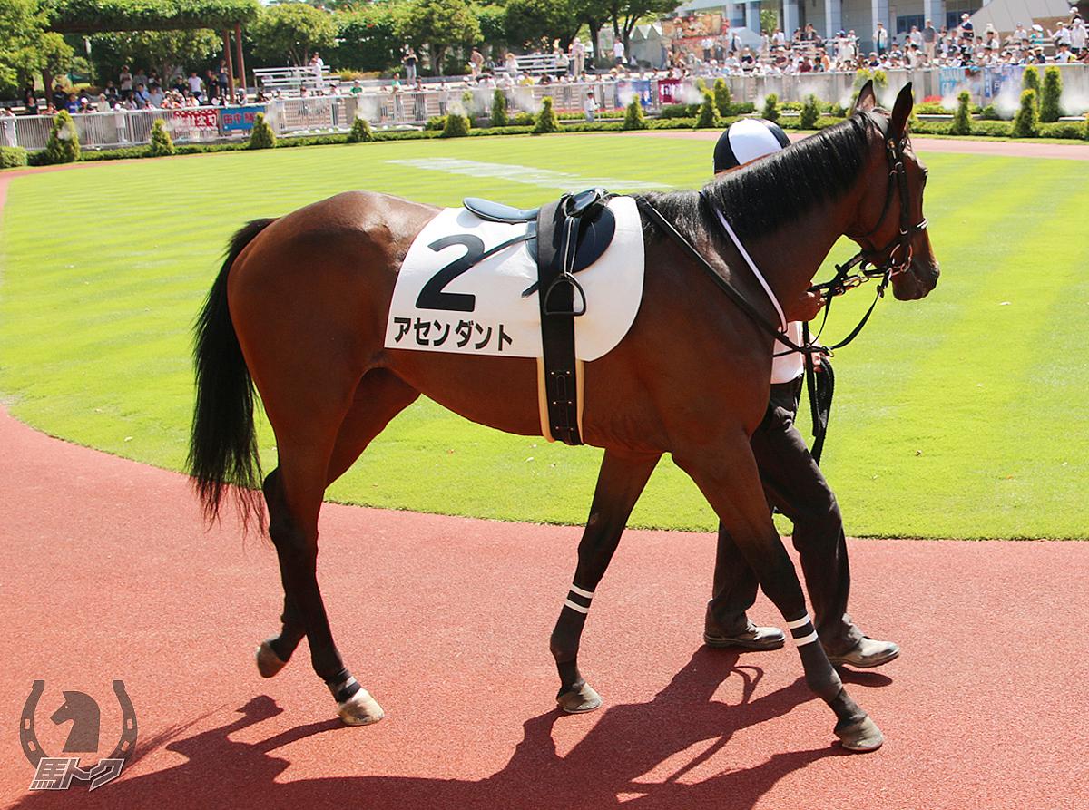 アセンダントの馬体写真