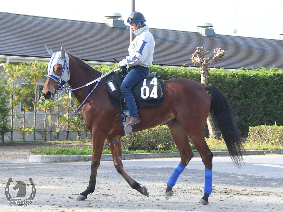 リヴォルバーの馬体写真