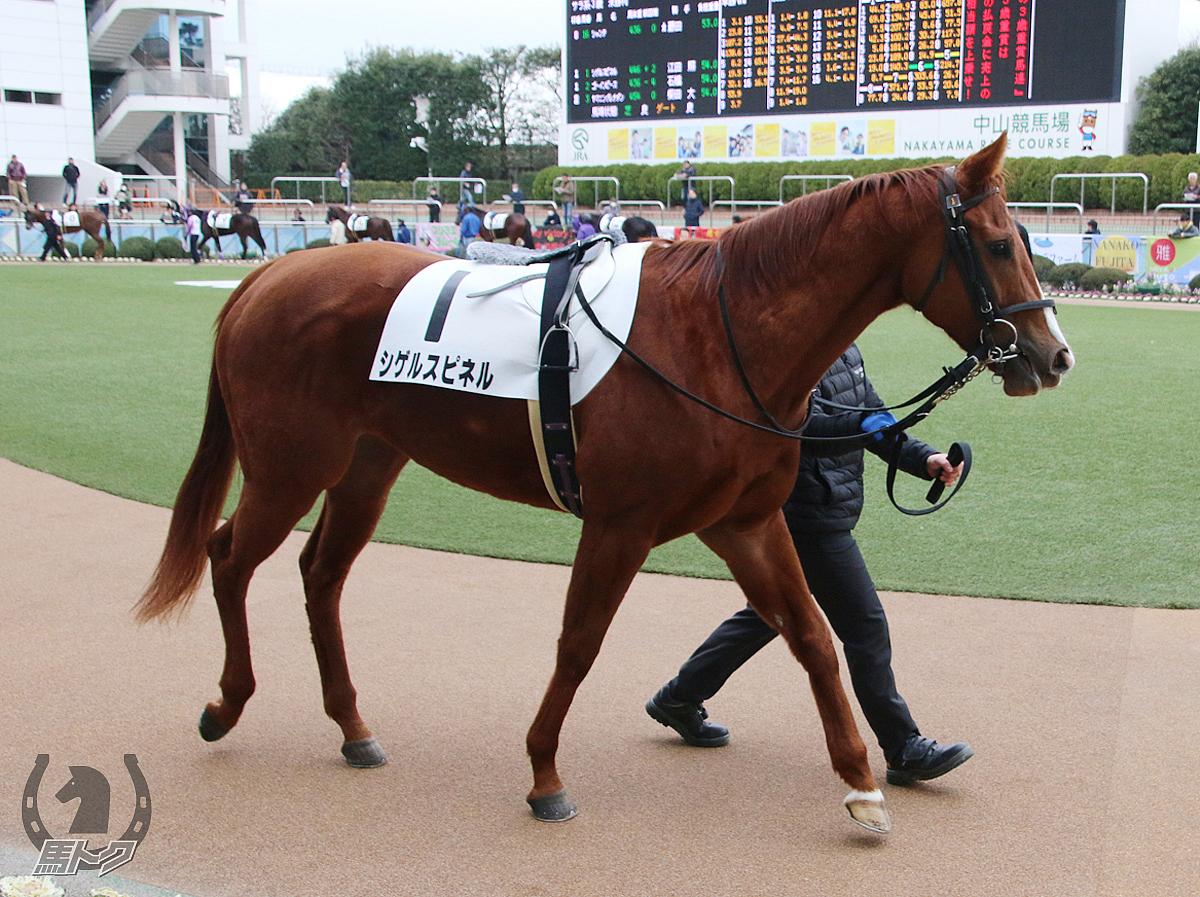シゲルスピネルの馬体写真