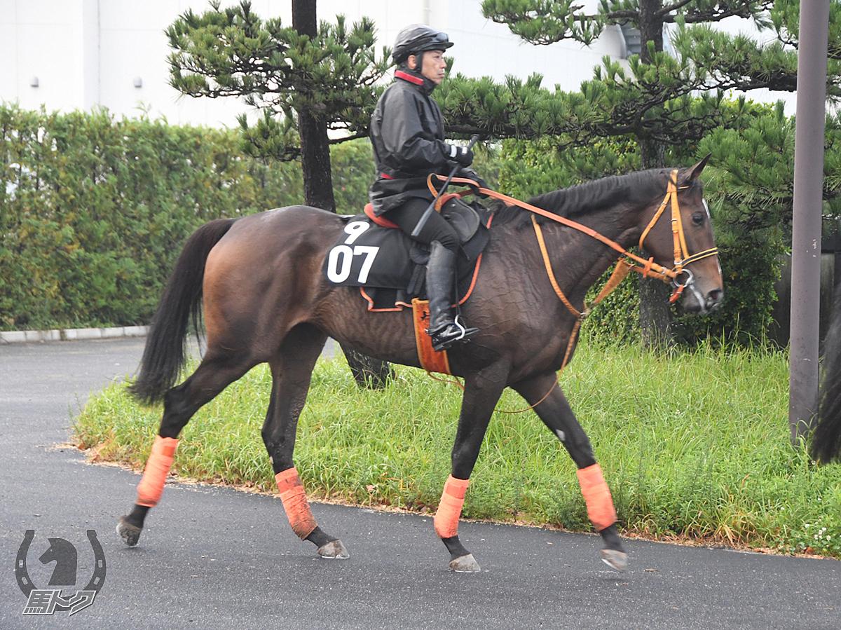 プレミアムギフトの馬体写真