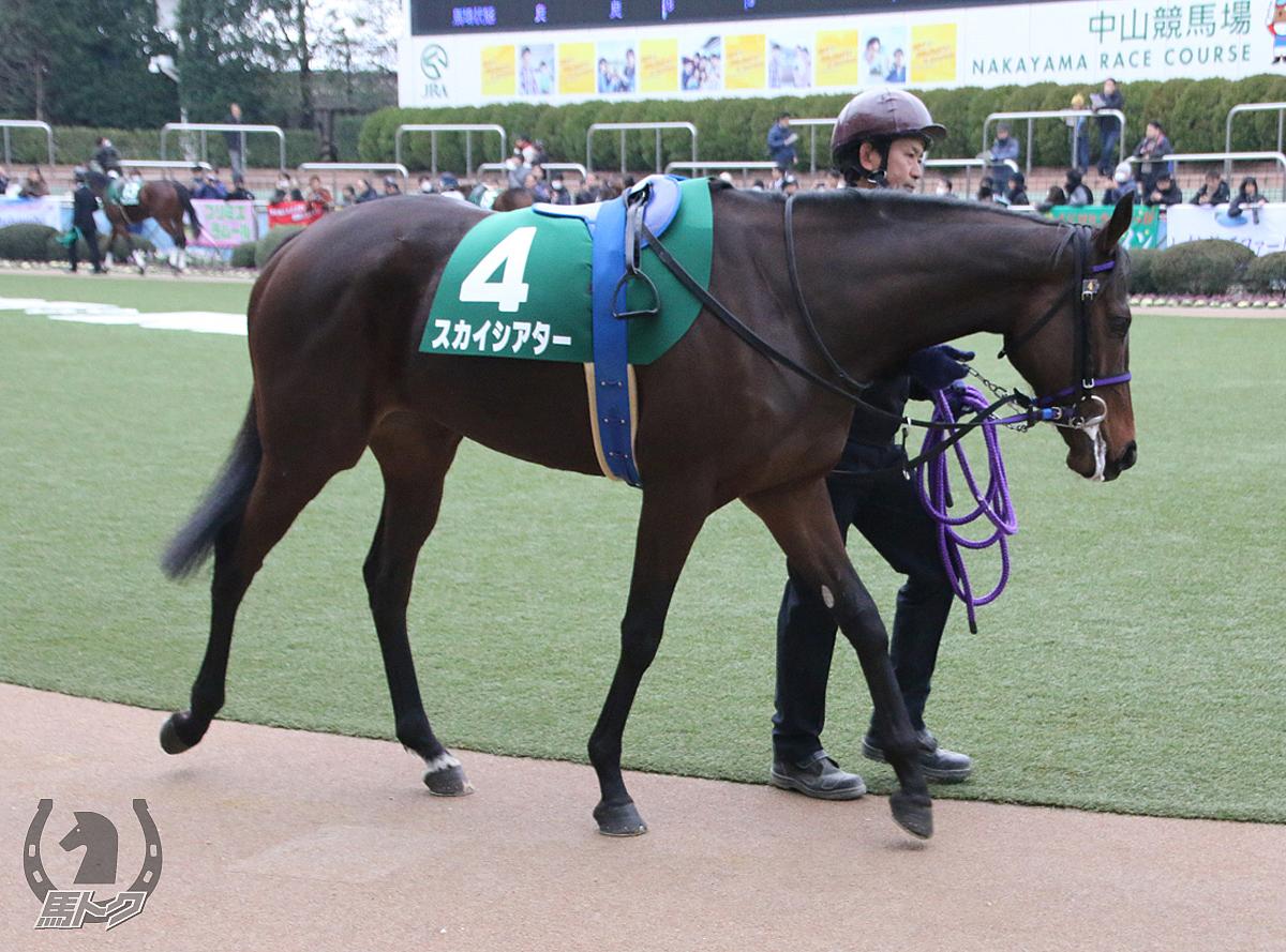 スカイシアターの馬体写真