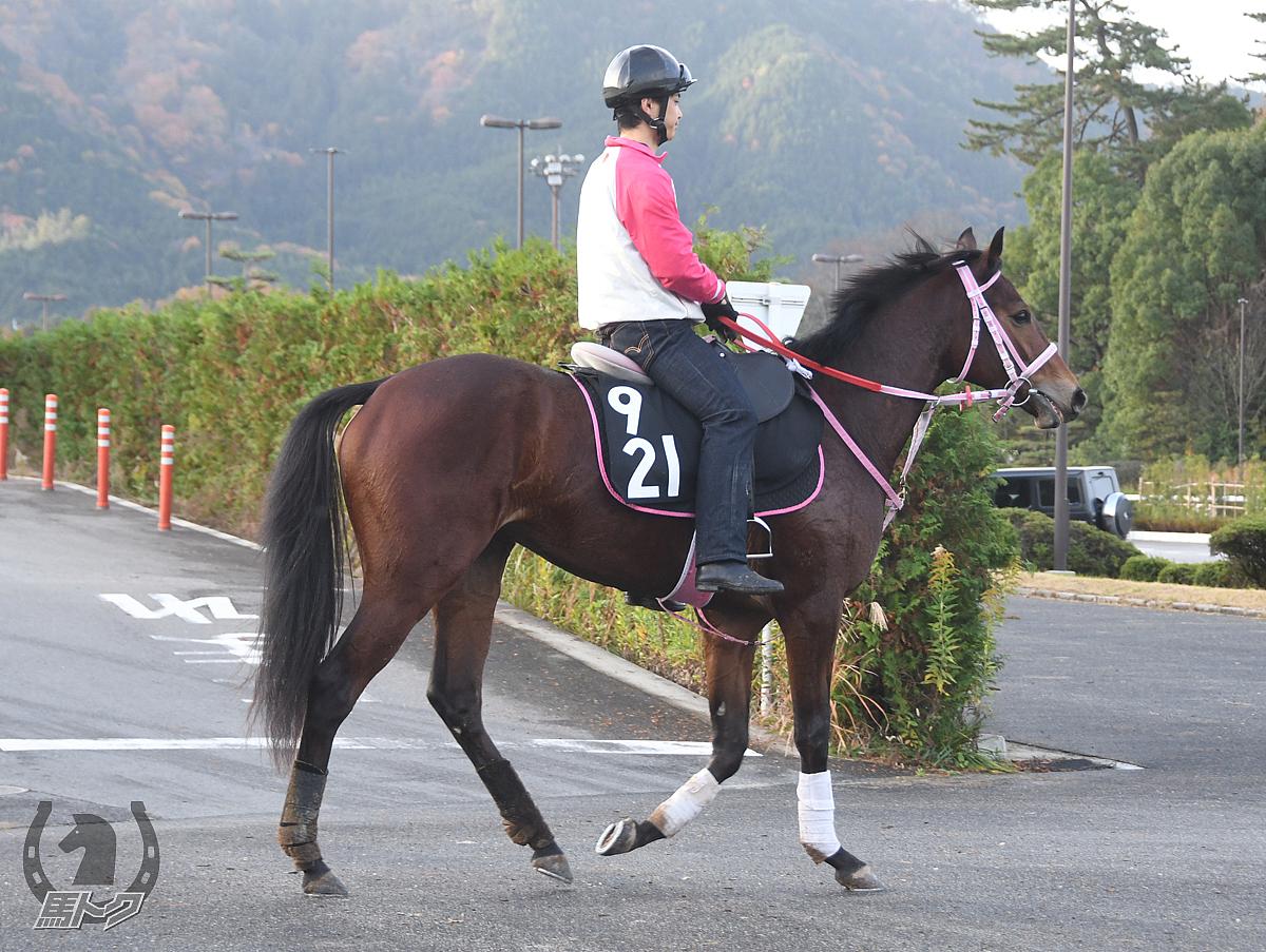 ベストチャームの馬体写真
