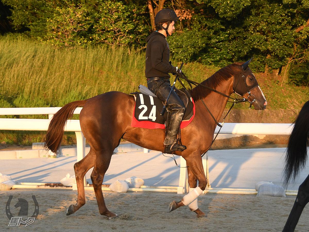 リップグロスの馬体写真