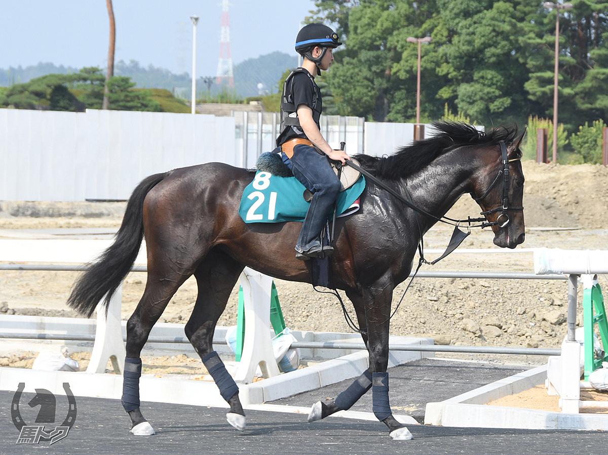 フォーエバーローズの馬体写真