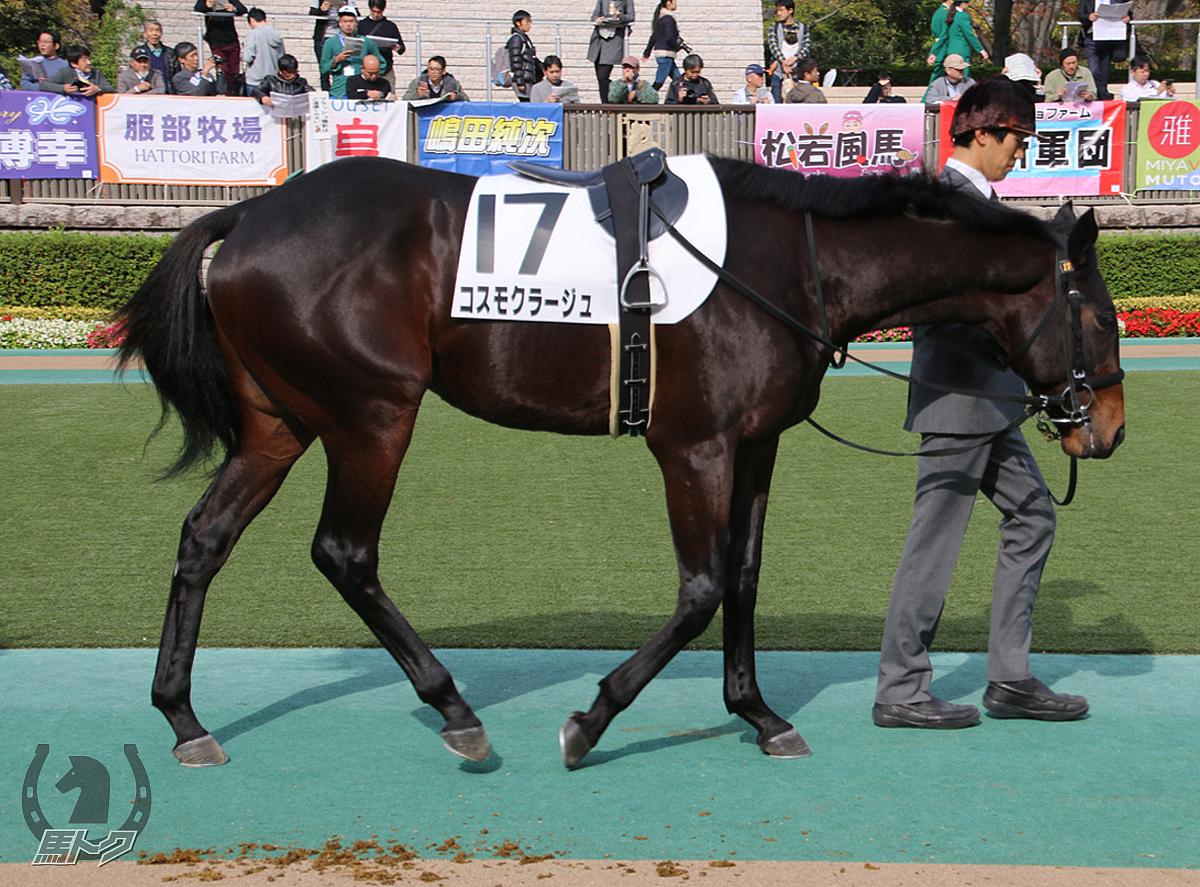 コスモクラージュの馬体写真