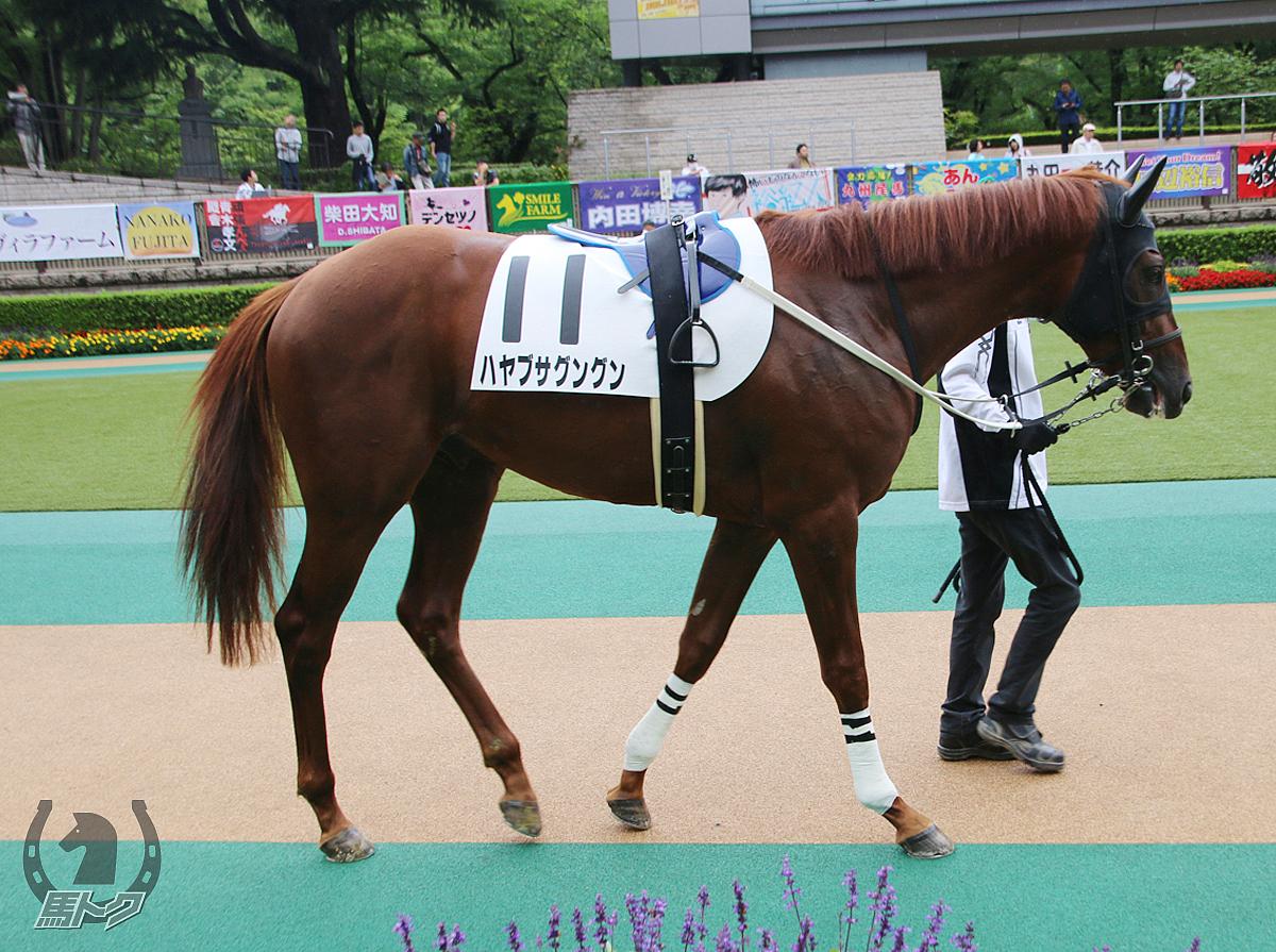 ハヤブサグングンの馬体写真
