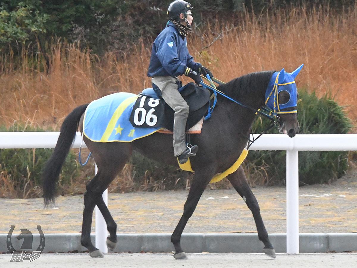ヴィクトワールメイの馬体写真