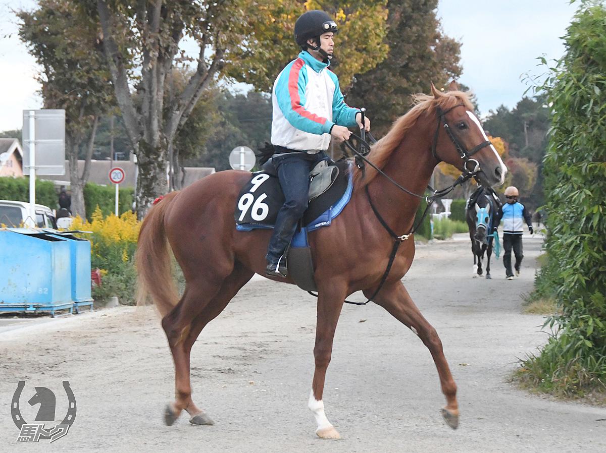 ミュークルクラスの馬体写真