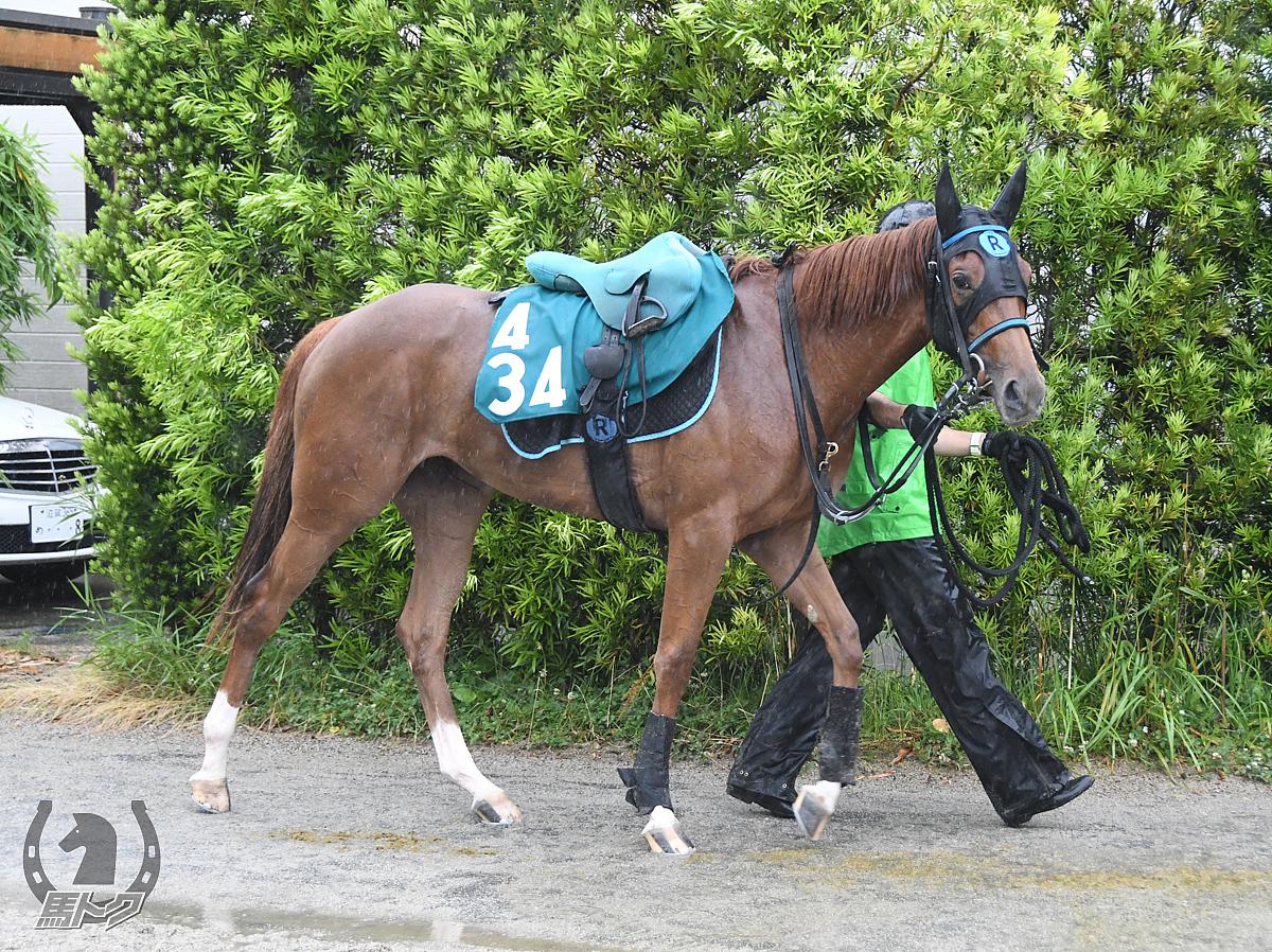 バレエシューズの馬体写真