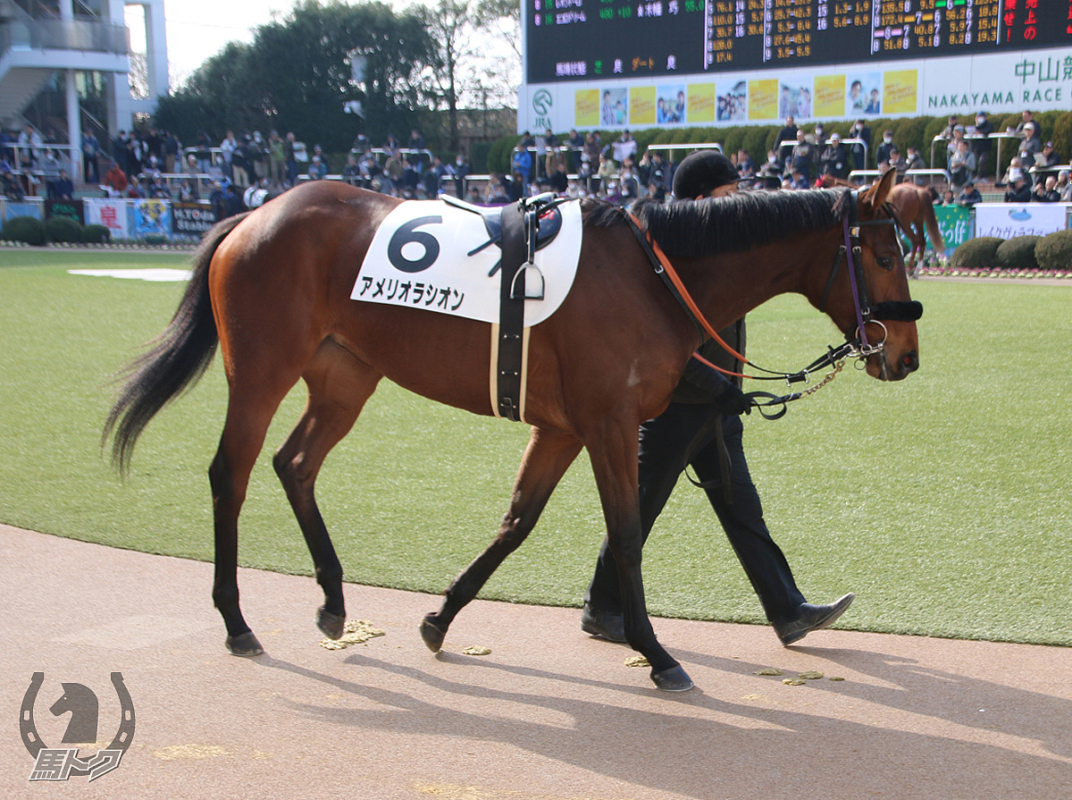 アメリオラシオンの馬体写真