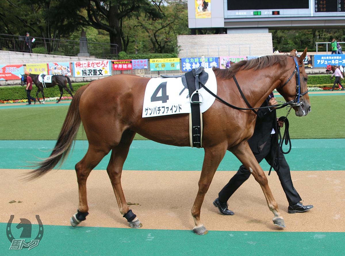 ゲンパチファインドの馬体写真
