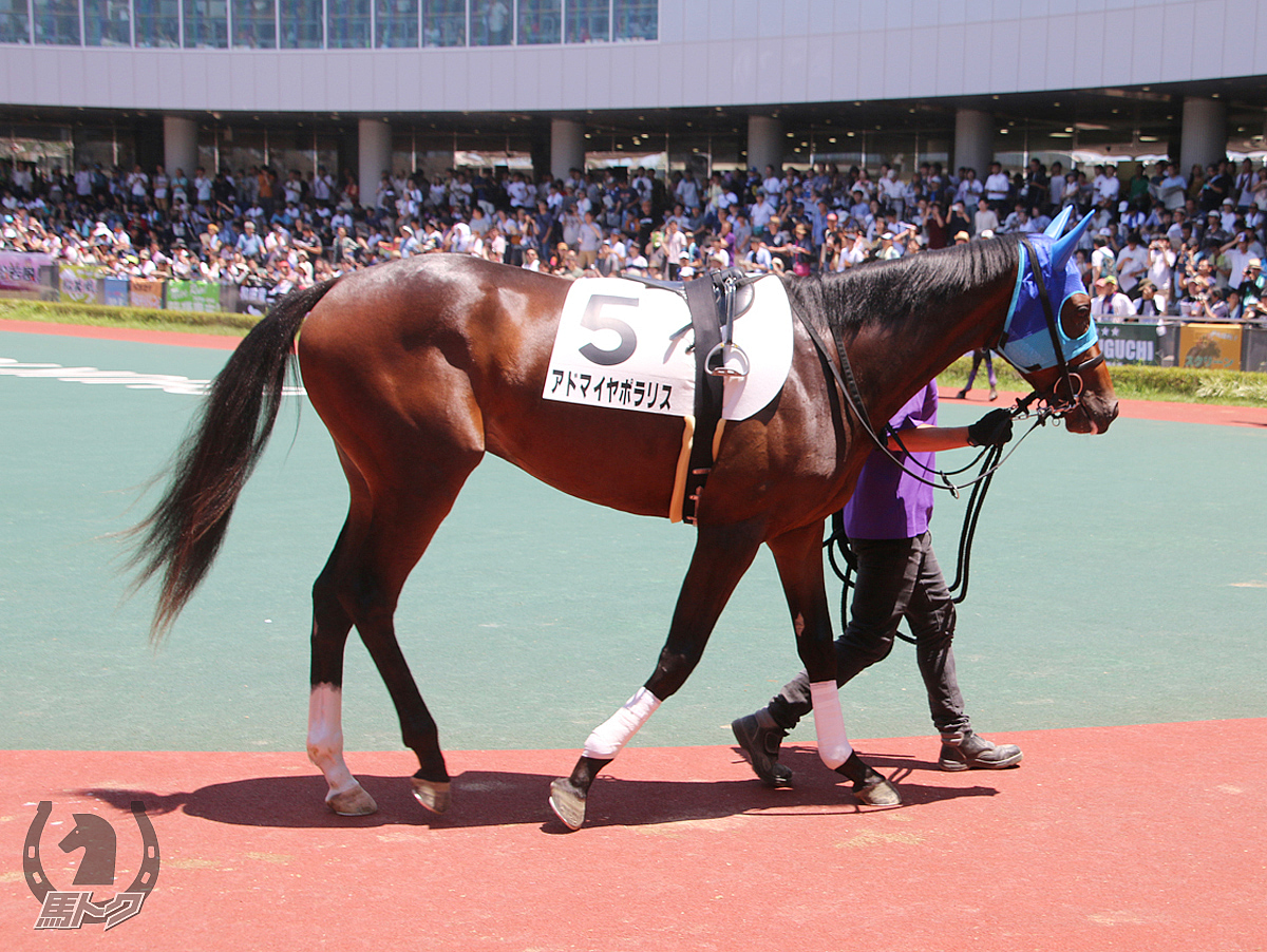 アドマイヤポラリスの馬体写真