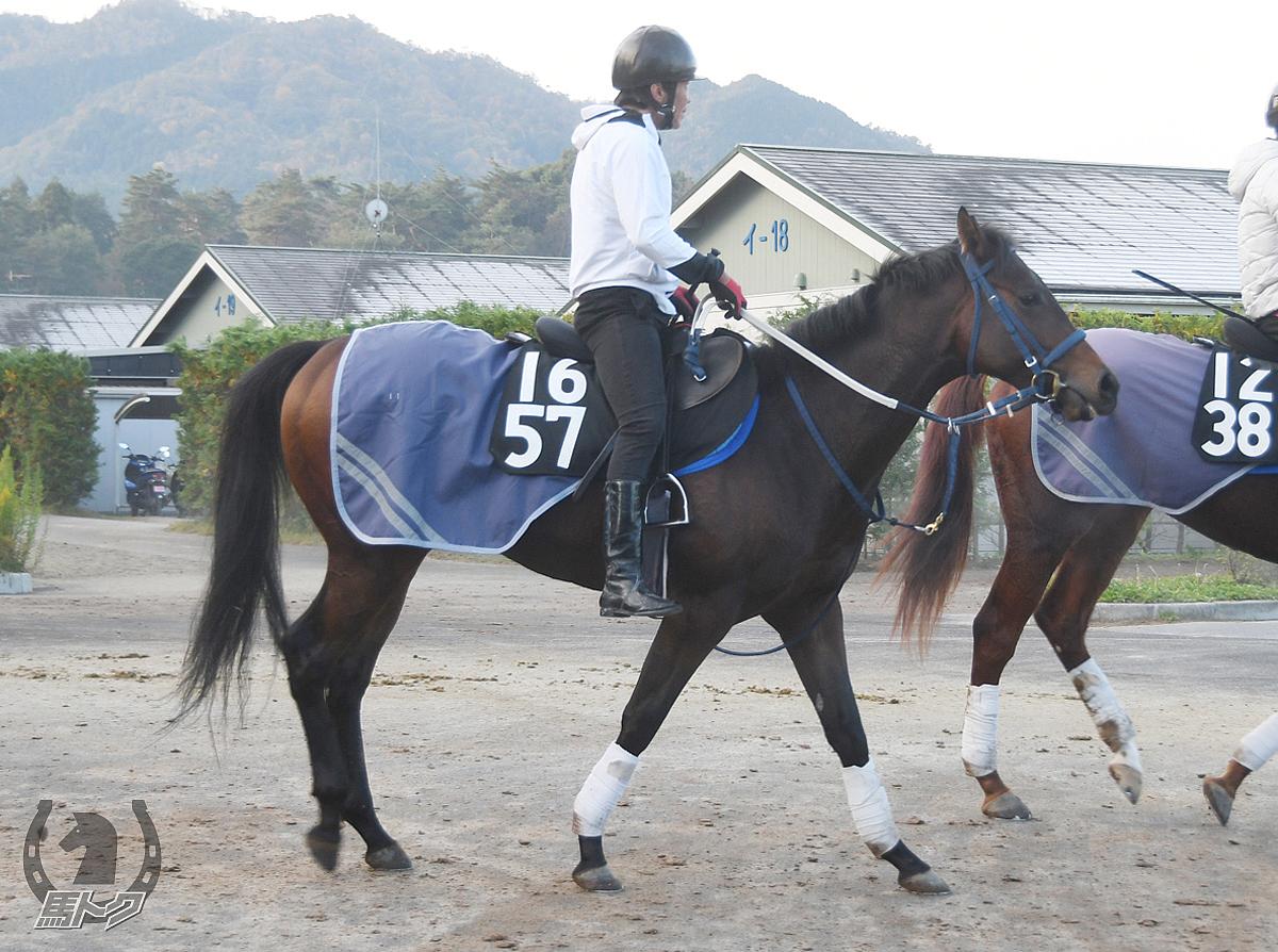 ブラックエクシードの馬体写真