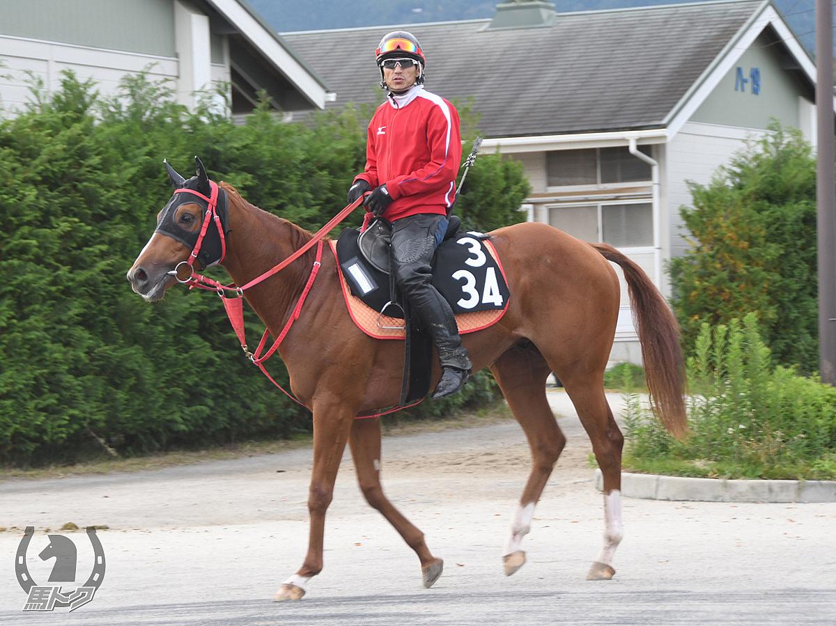 ケアラケクアベイの馬体写真