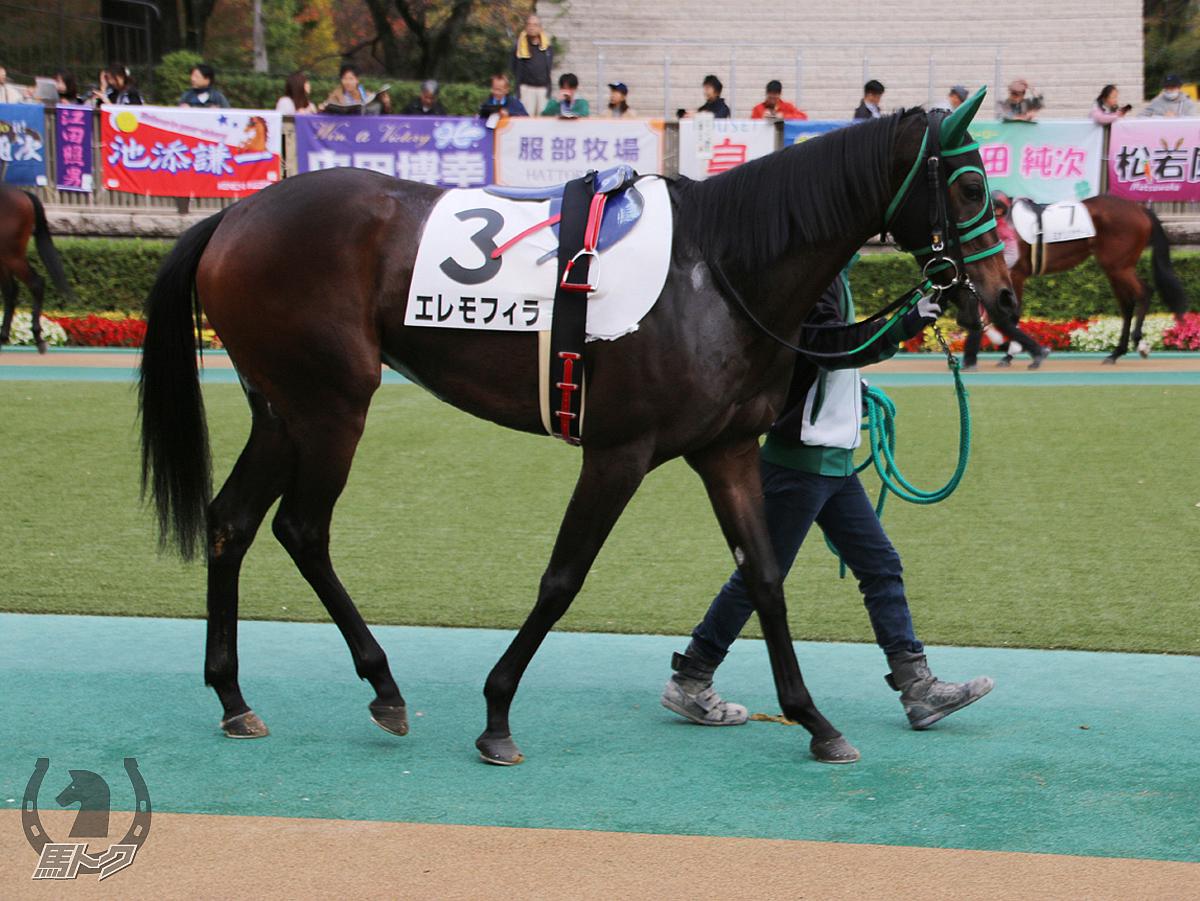 エレモフィラの馬体写真
