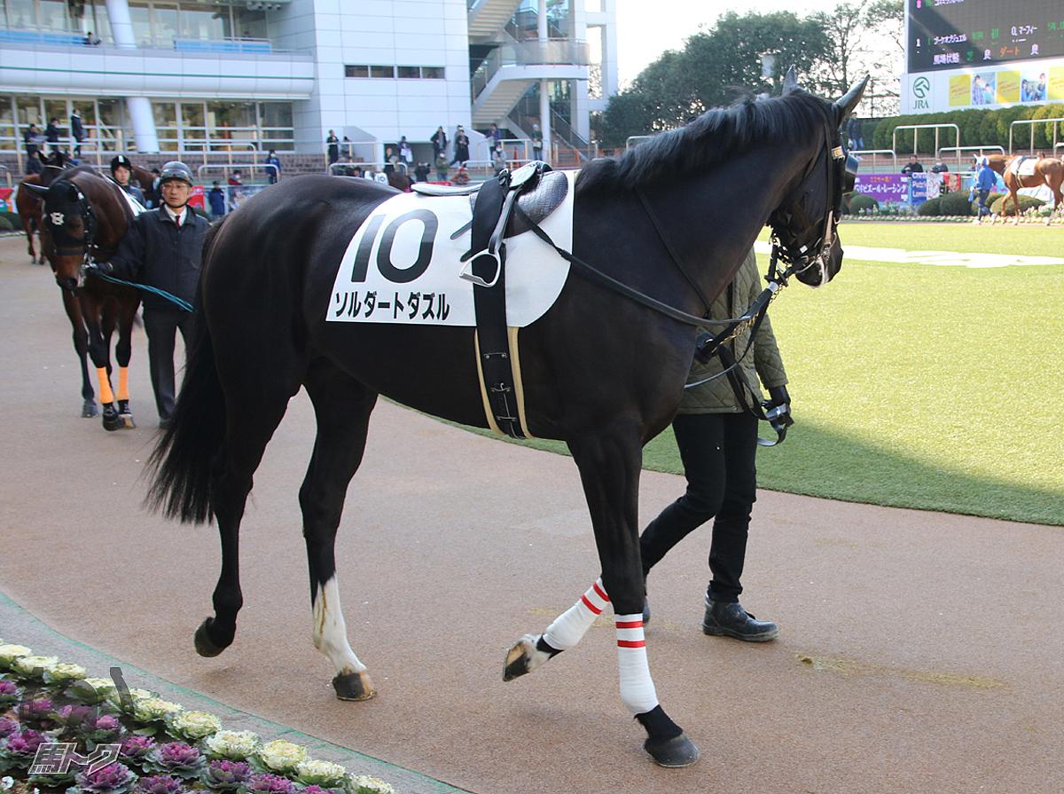 ソルダートダズルの馬体写真