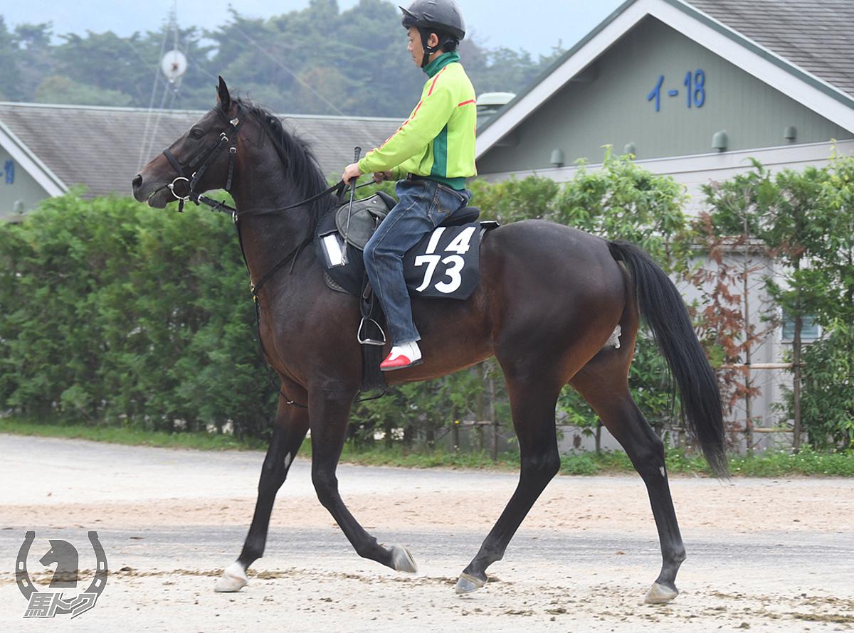 ルルドの馬体写真