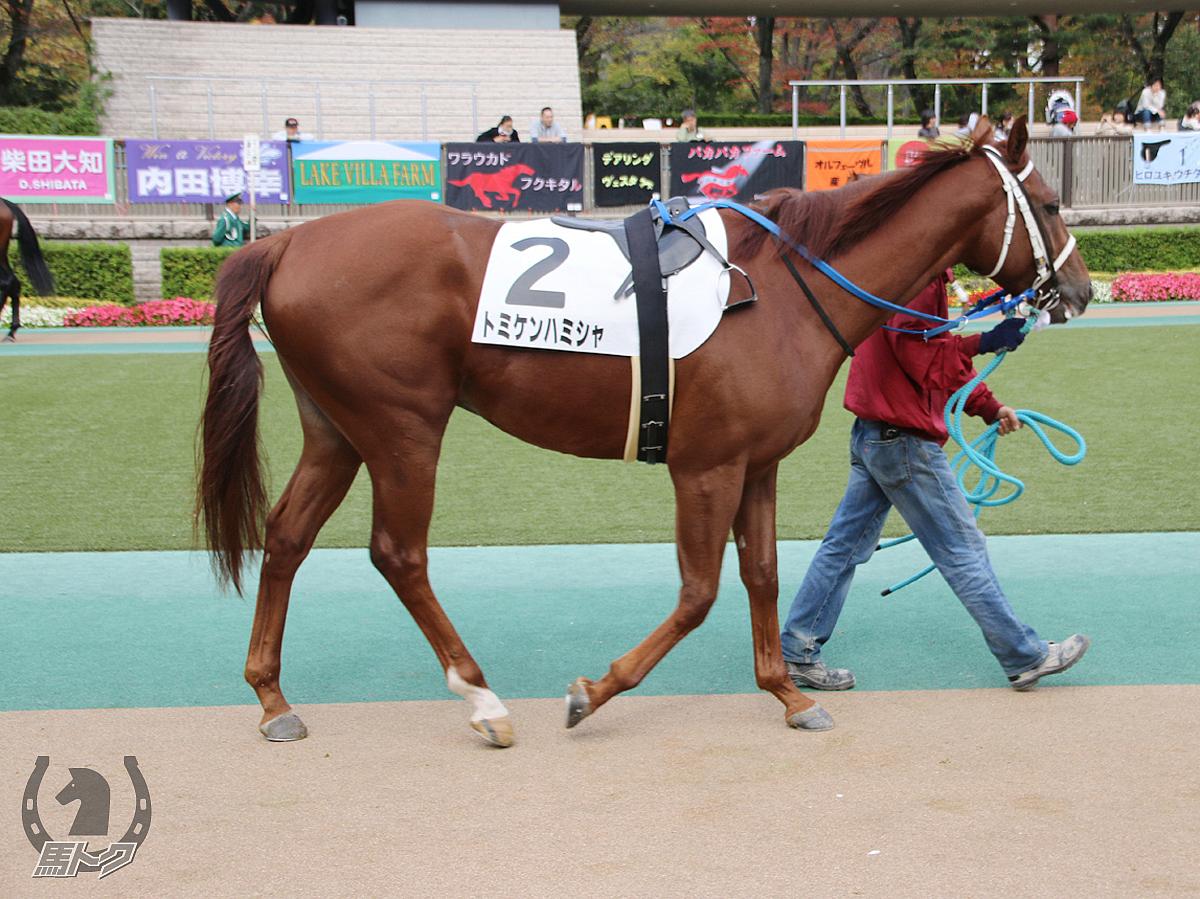トミケンハミシャの馬体写真