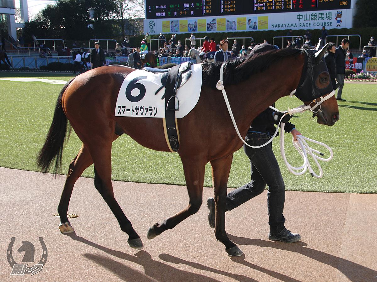 スマートサヴァランの馬体写真