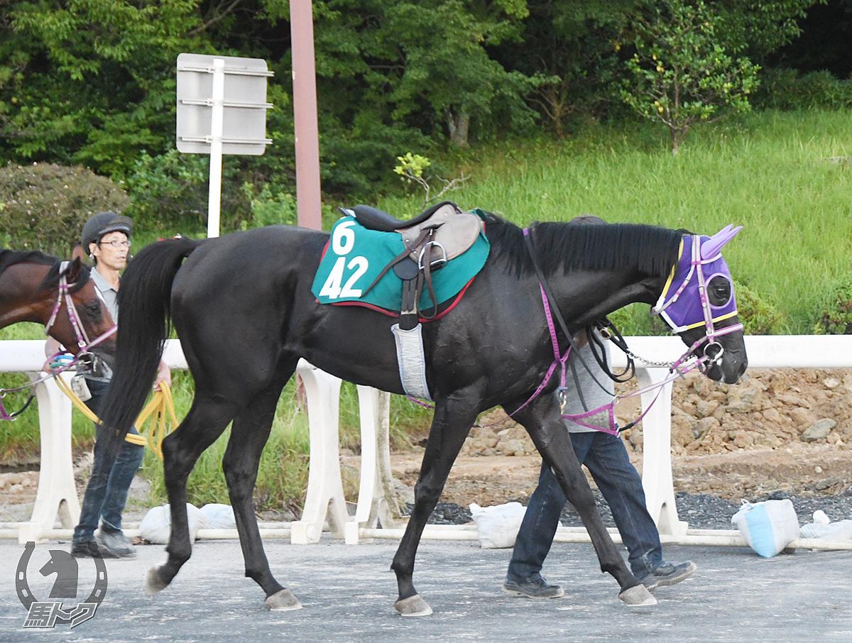 モズリスペクトの馬体写真