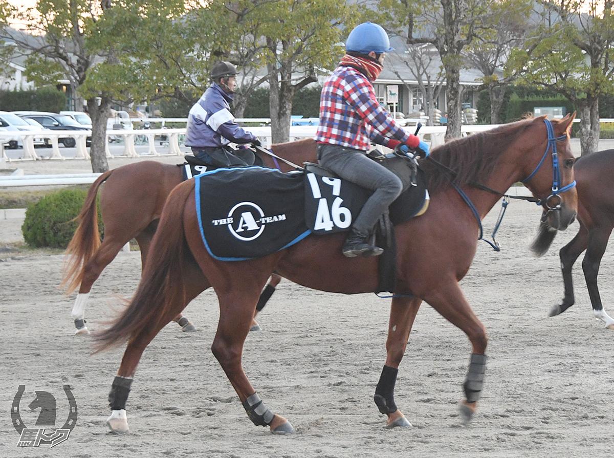 ハクユウラッキーの馬体写真