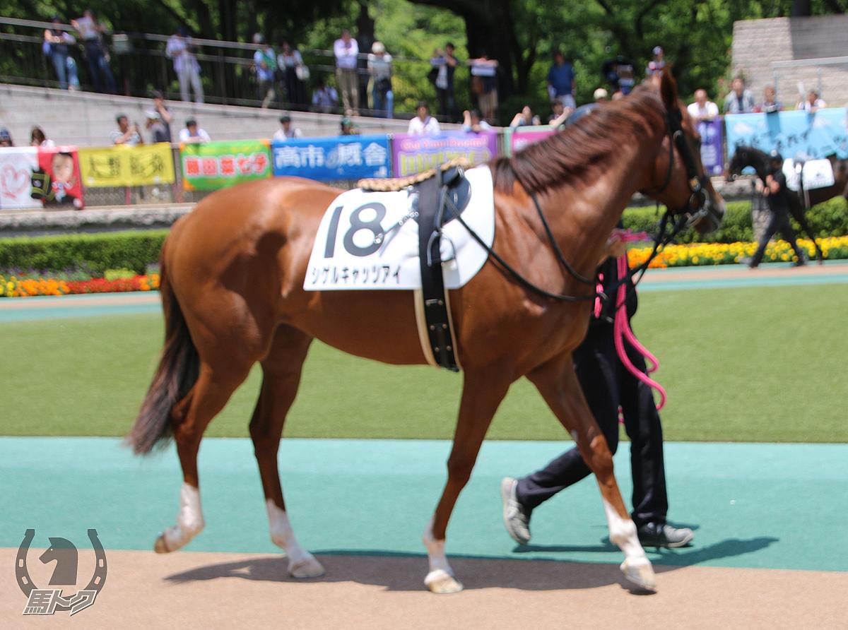 シゲルキャッツアイの馬体写真