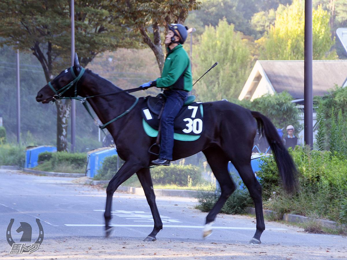 ニシノコントラバスの馬体写真