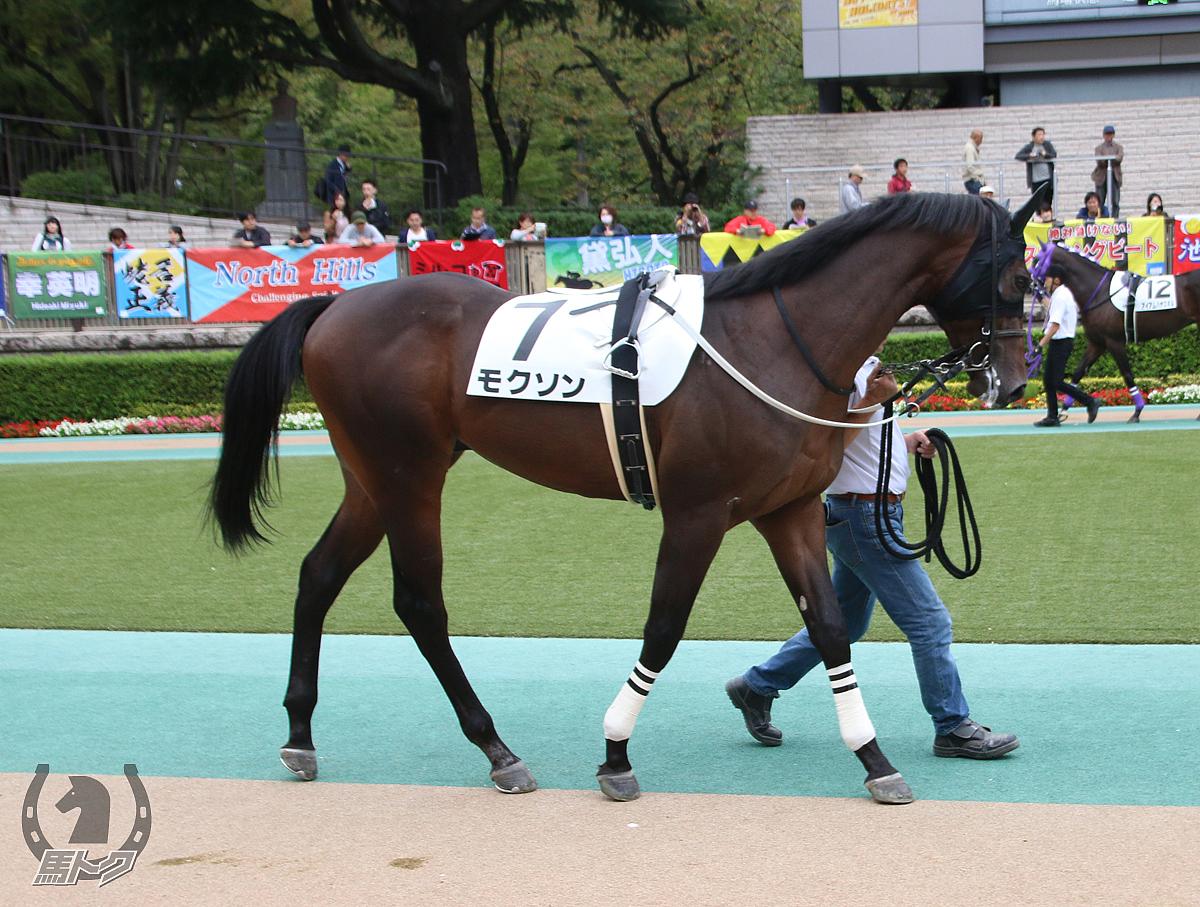 モクソンの馬体写真