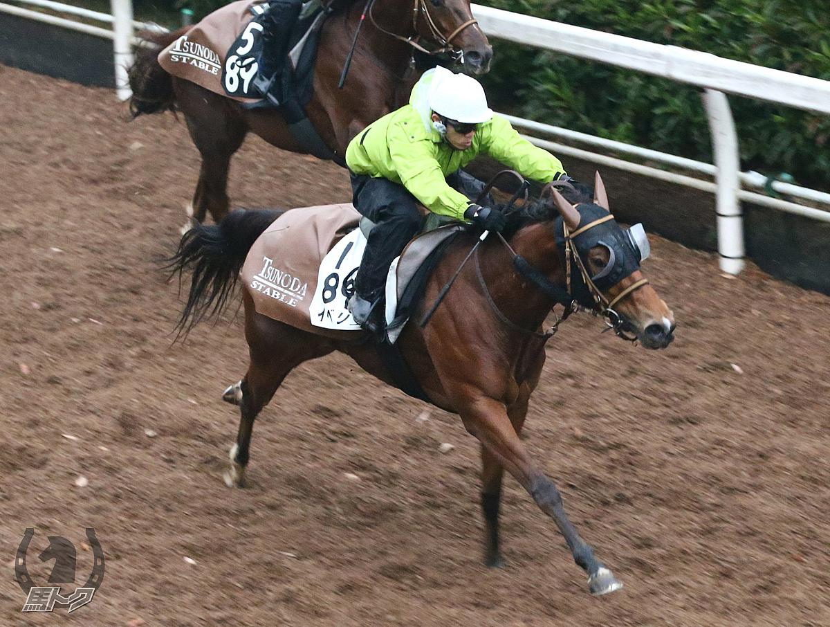 イベリスの馬体写真