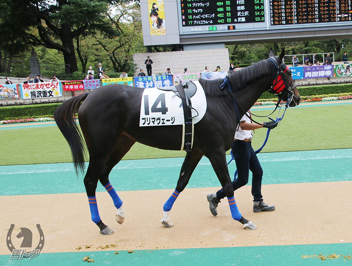 プリマヴェージの馬体写真