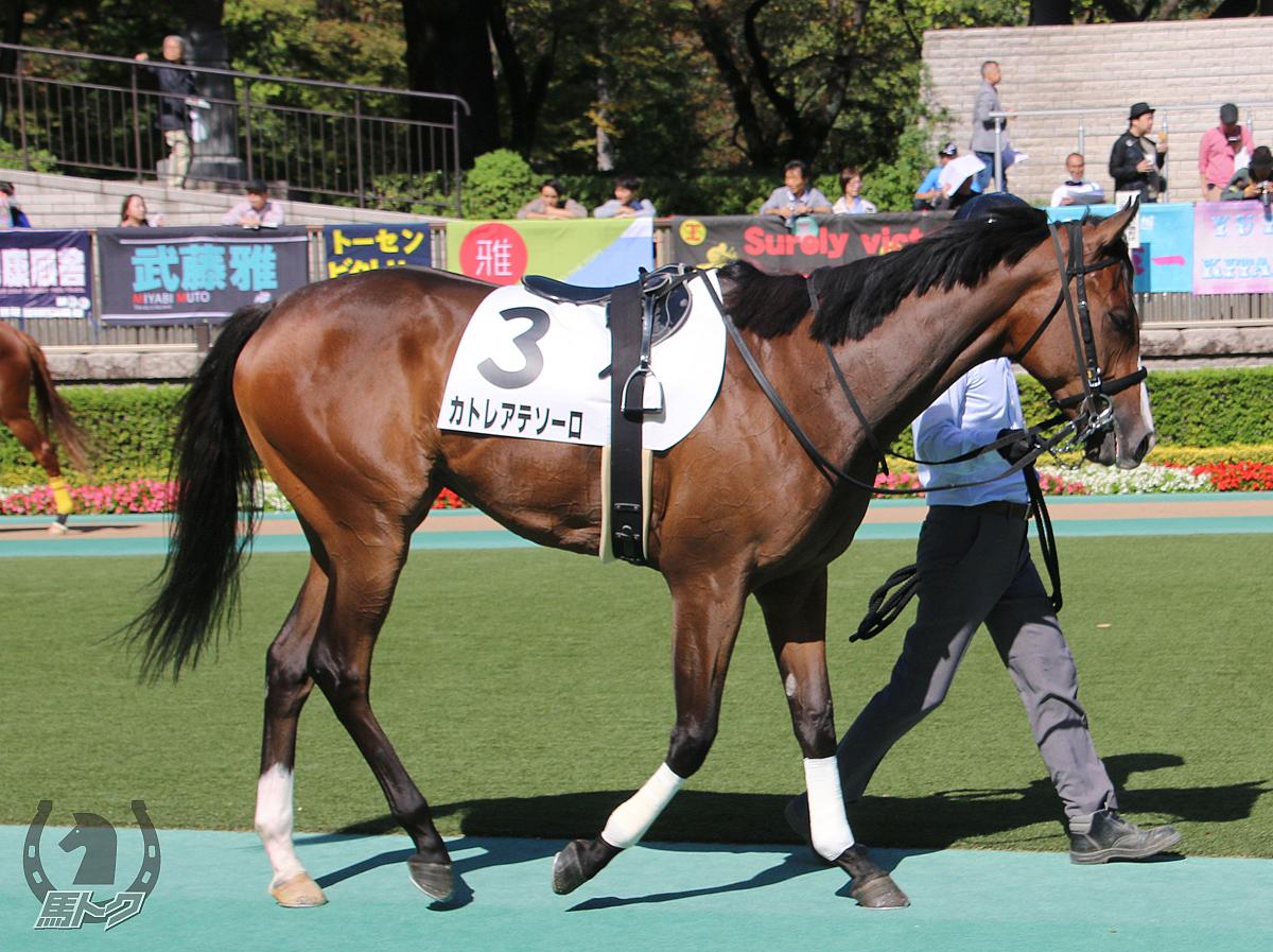 カトレアテソーロの馬体写真
