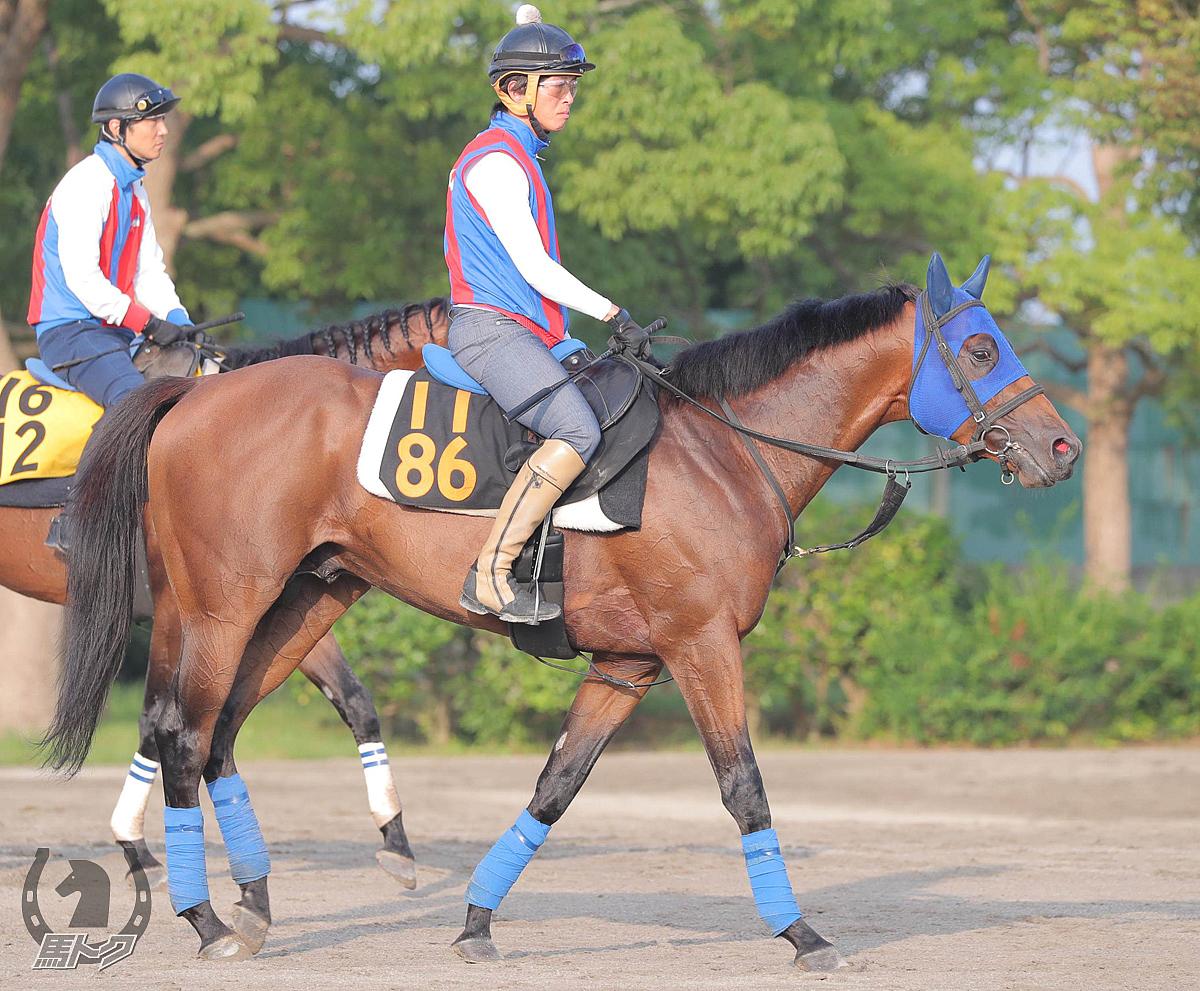 ポルーニンの馬体写真
