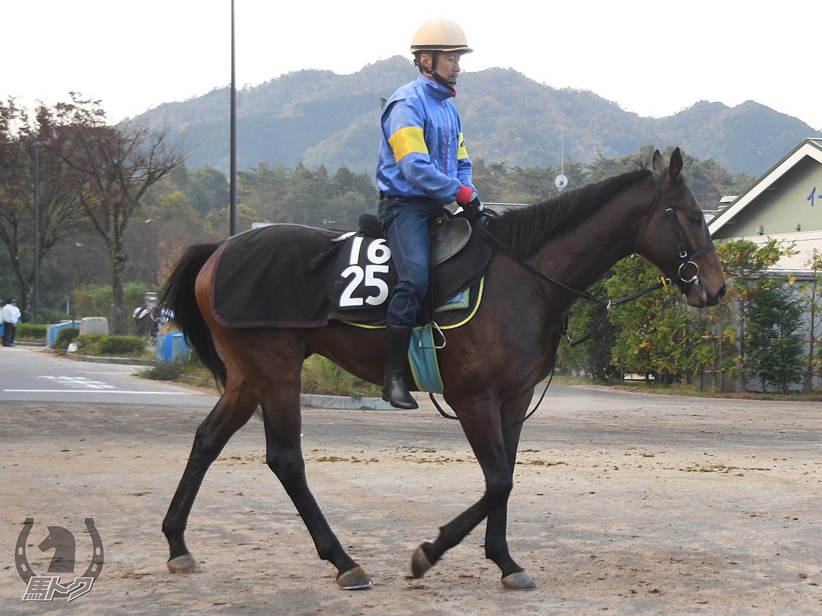 ブルベアカーキの馬体写真