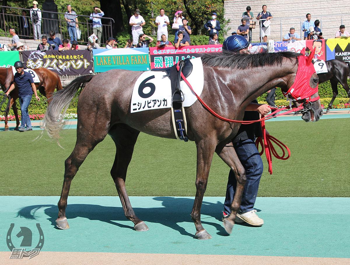 ニシノビアンカの馬体写真