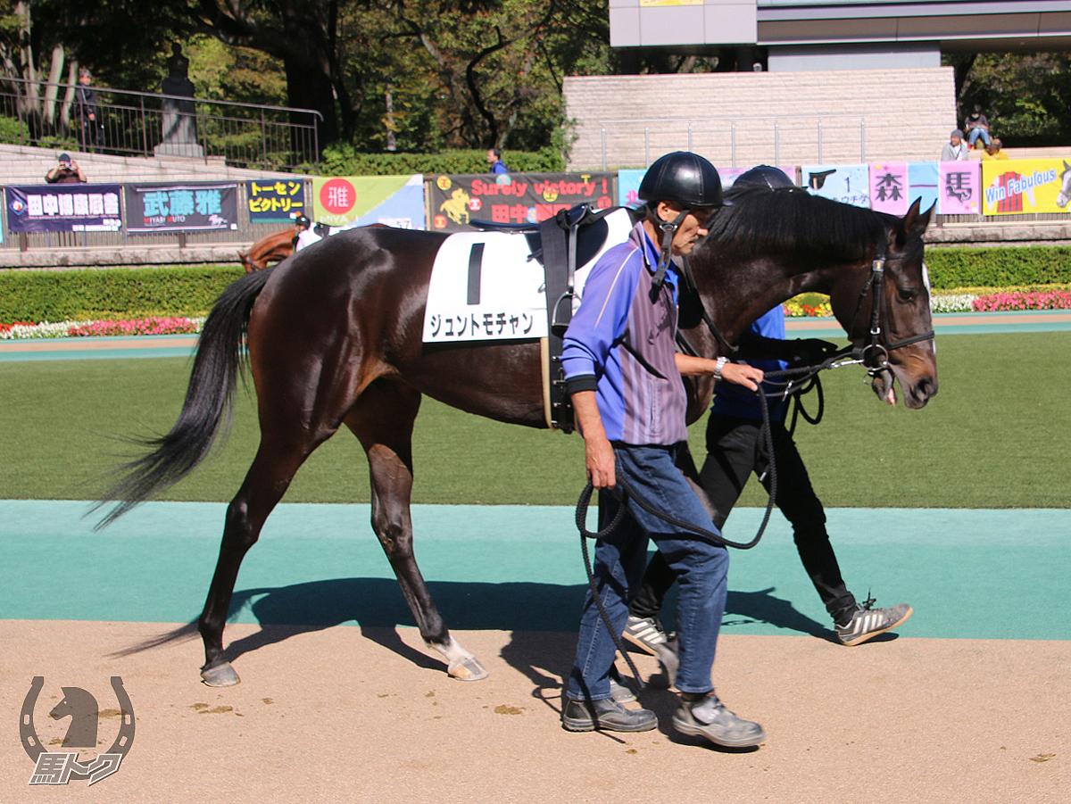 ジュントモチャンの馬体写真