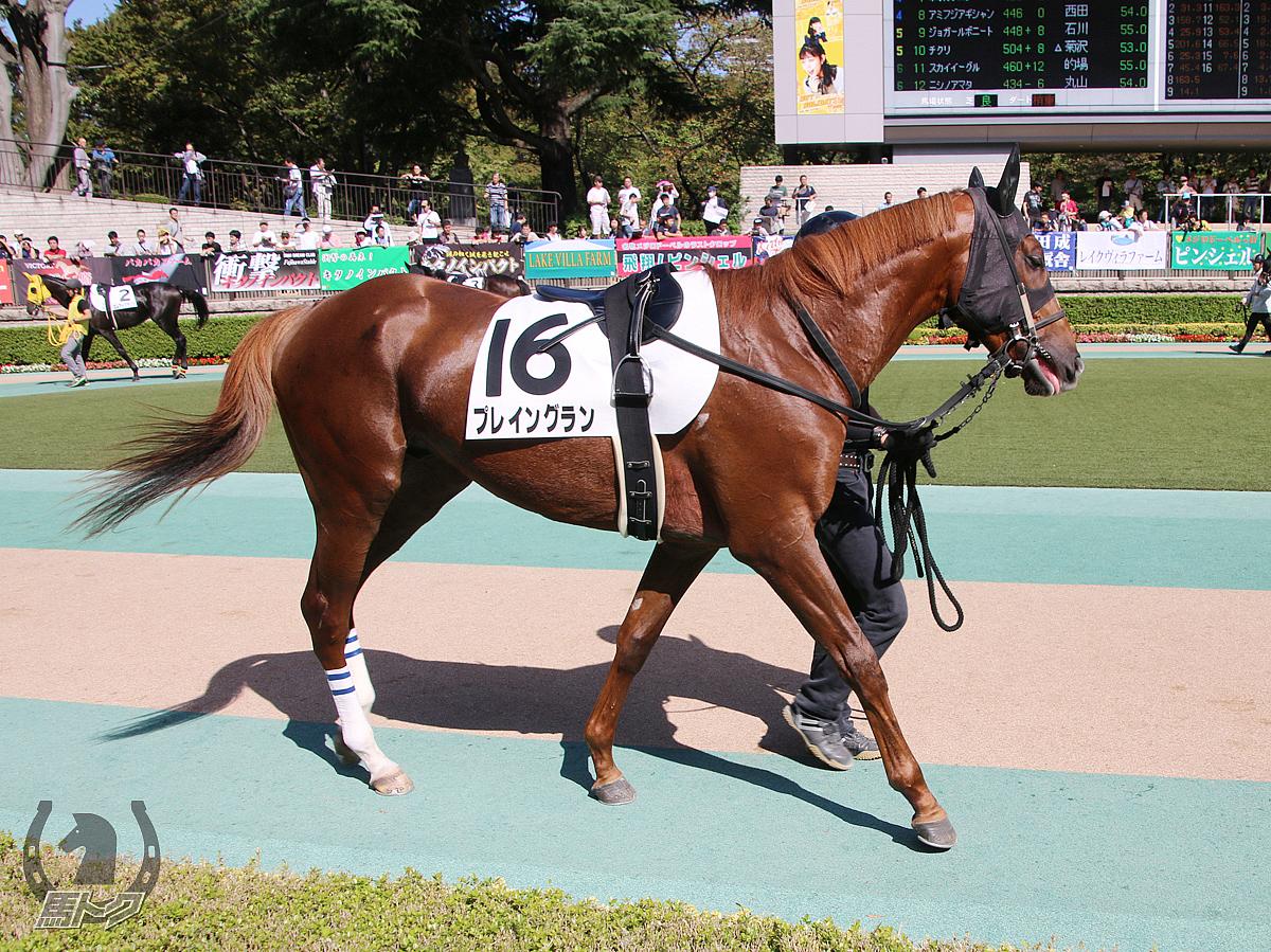 プレイングランの馬体写真