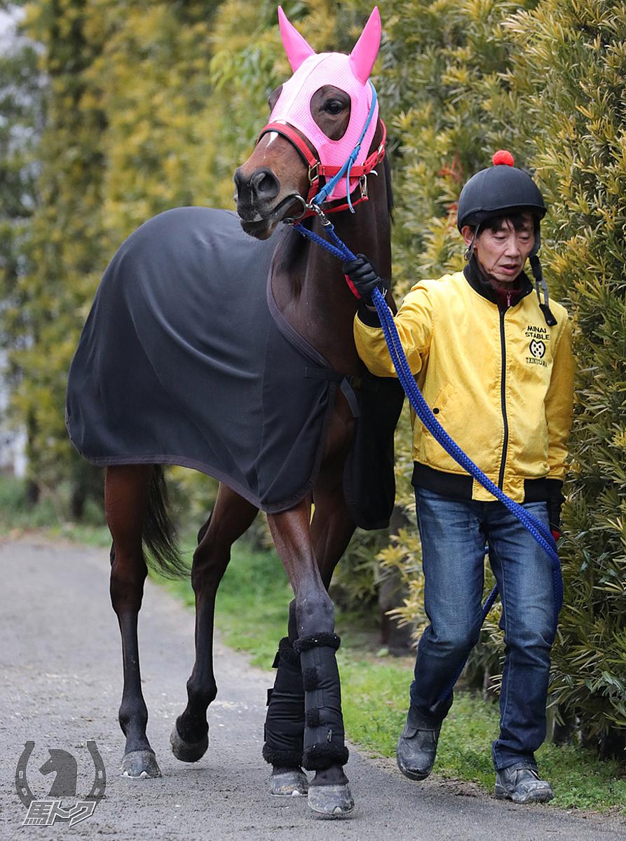 アスタールビーの馬体写真