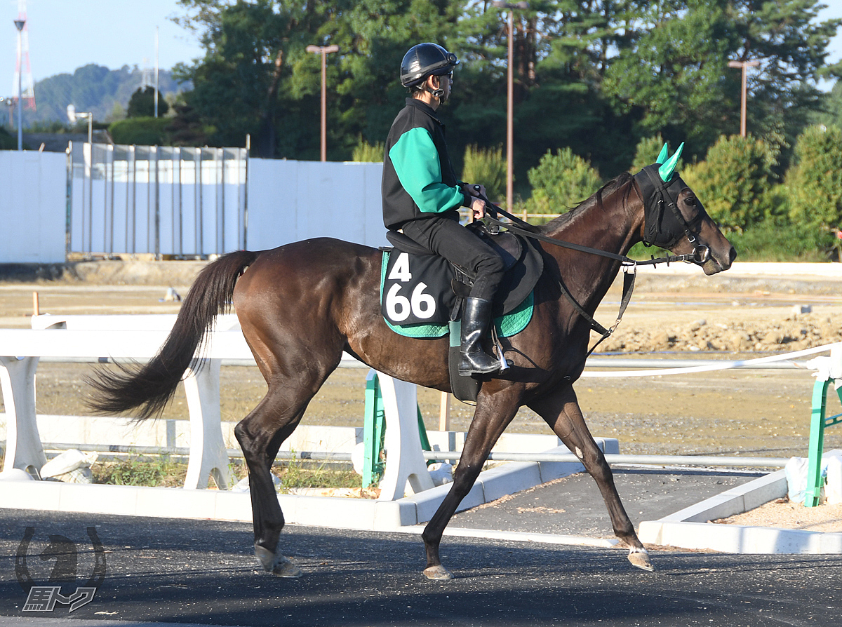ジョーカリンの馬体写真