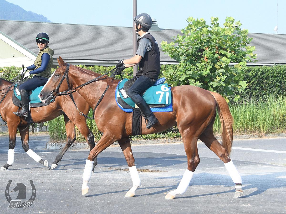 トウカイオラージュの馬体写真