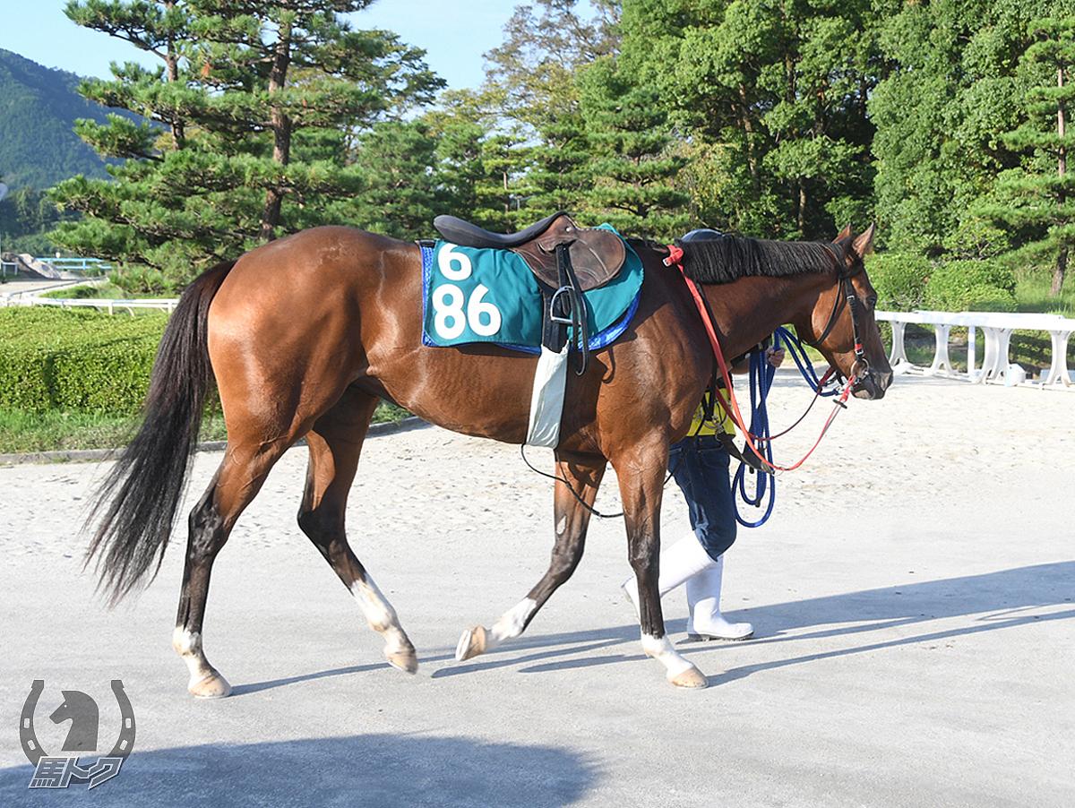 クリノベロニカの馬体写真