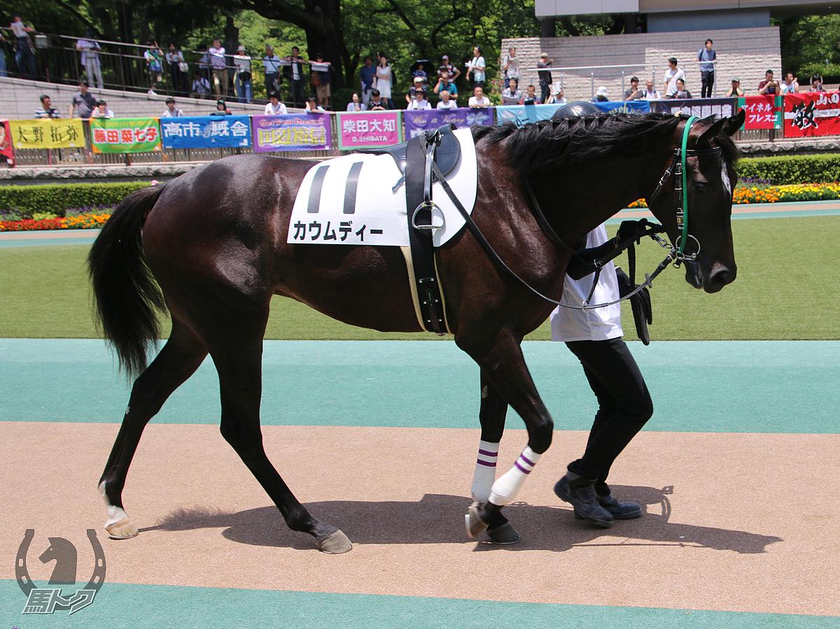 カウムディーの馬体写真