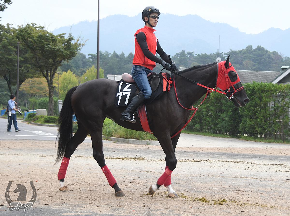 シシリエンヌの馬体写真