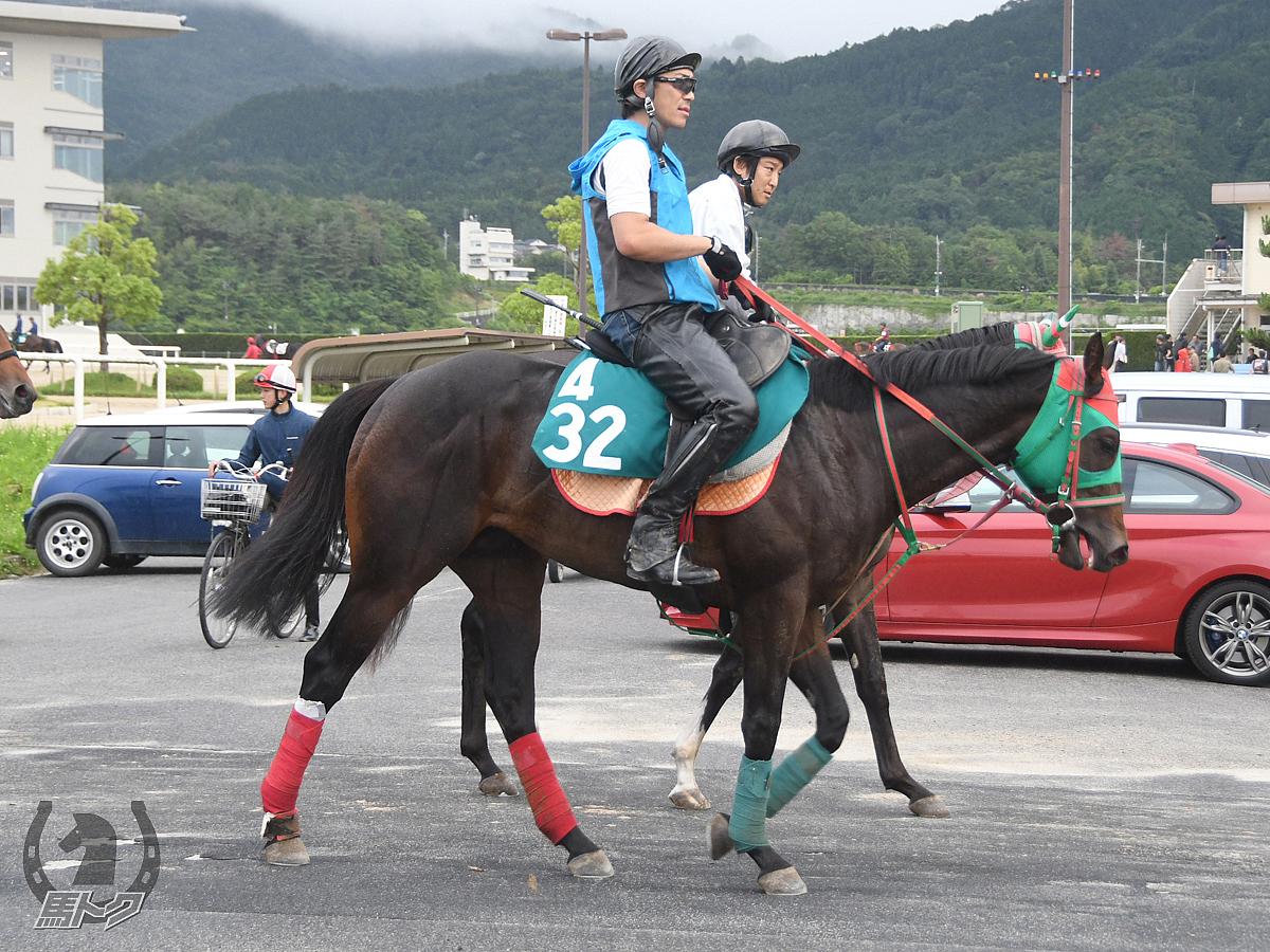 ウインバルドルの馬体写真