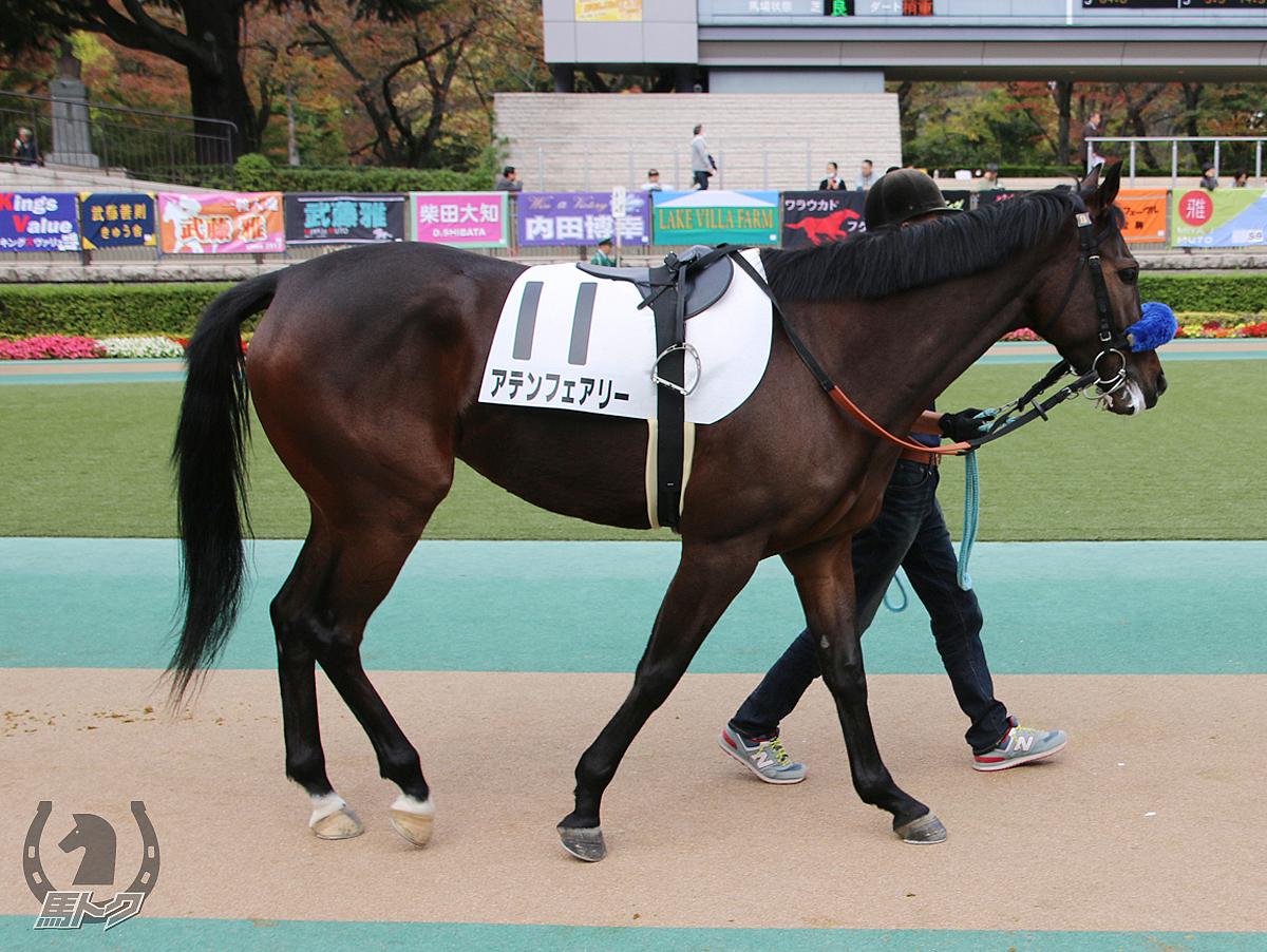アテンフェアリーの馬体写真