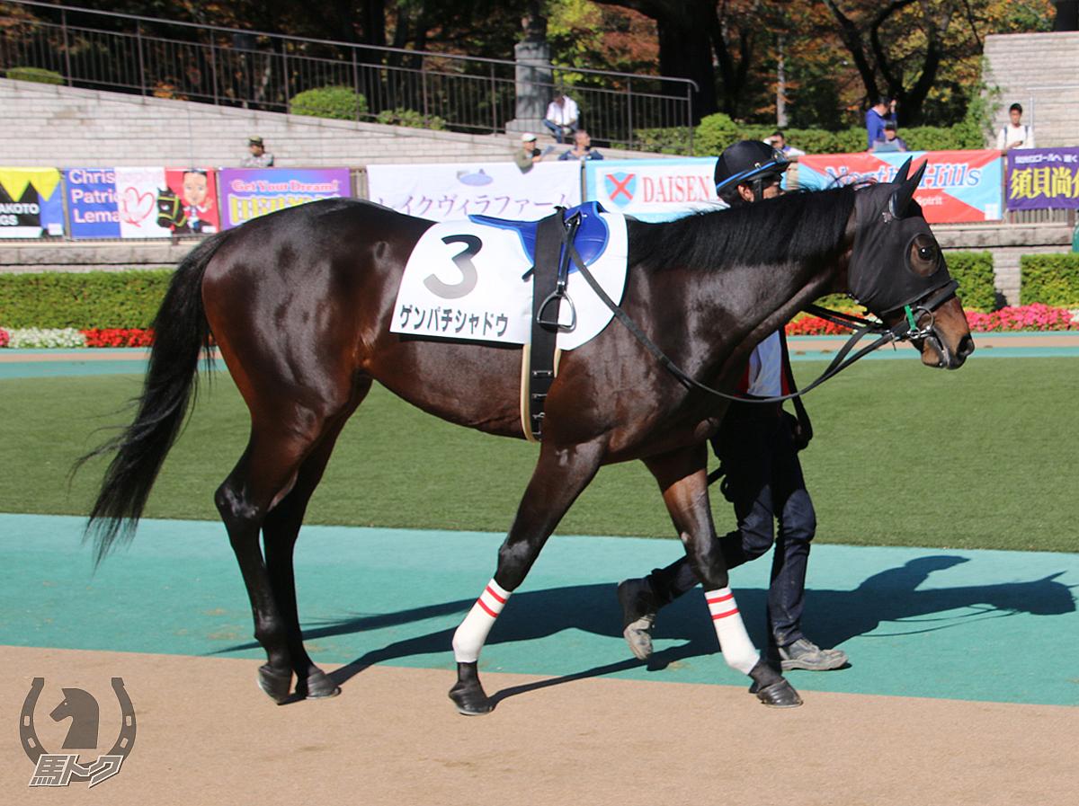 ゲンパチシャドウの馬体写真