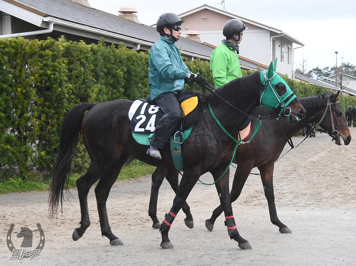 ウインヴァモスの馬体写真