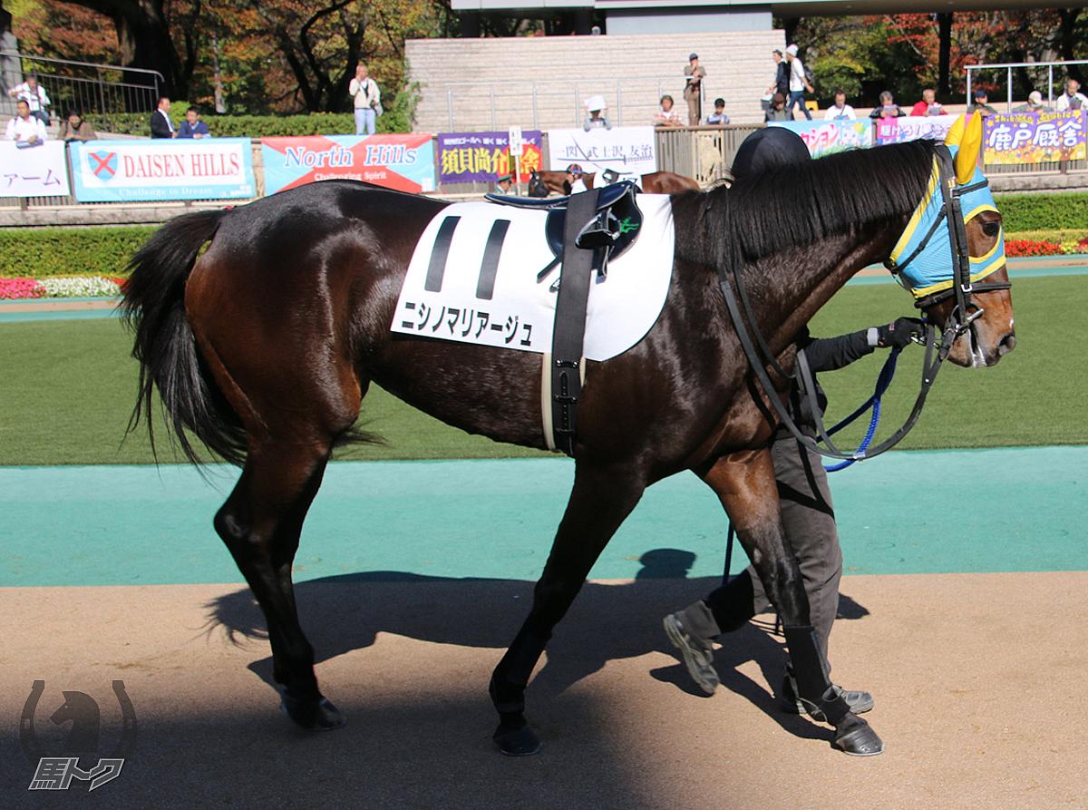 ニシノマリアージュの馬体写真