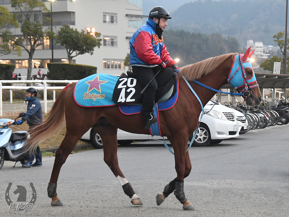 スマートサーブルの馬体写真