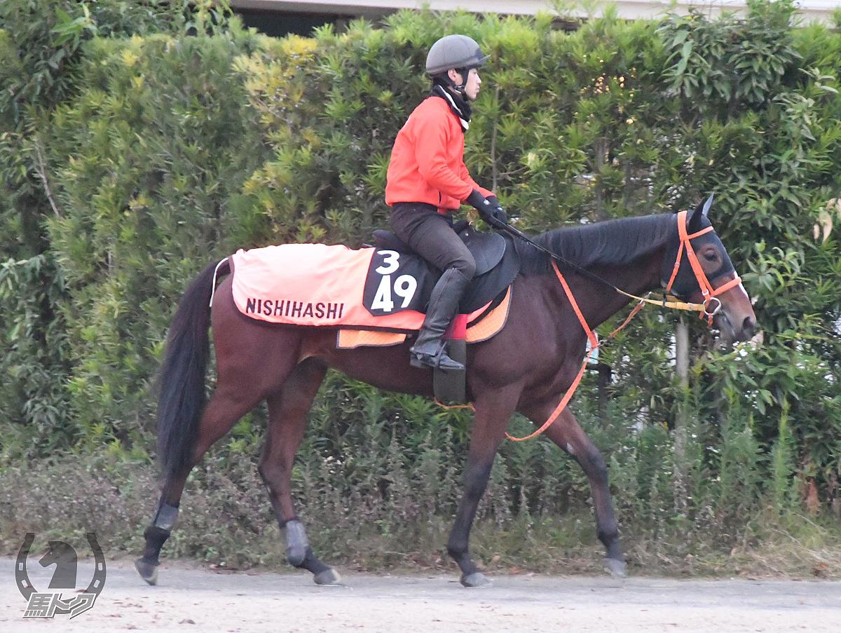 ケープリーガルの馬体写真